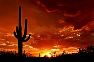 Silhouettes of saguaro cacti stand out against a red sky at sunset.