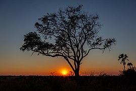 Salida de sol, delta del Okavango, Botsuana, 2018-08-01, DD 21.jpg