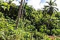 Samaná Province, Dominican Republic - panoramio (56).jpg