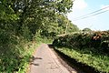 Sampford Peverell, between East Pitt and Trumps - geograph.org.uk - 65708.jpg