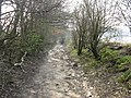 Sandy bridleway near Stopham - geograph.org.uk - 1209749.jpg