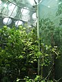 Sanfrancisco caacademysciences greenhouse.jpg