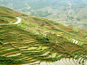 Terraced fields in Sa Pa.