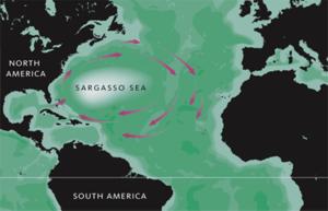 Sargasso Sea - Image: Sargasso