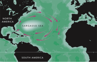 Sargasso Sea A region in the gyre in the middle of the North Atlantic Ocean