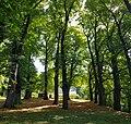 Schin op Geul-bomenkathedraal Kluis (2).jpg