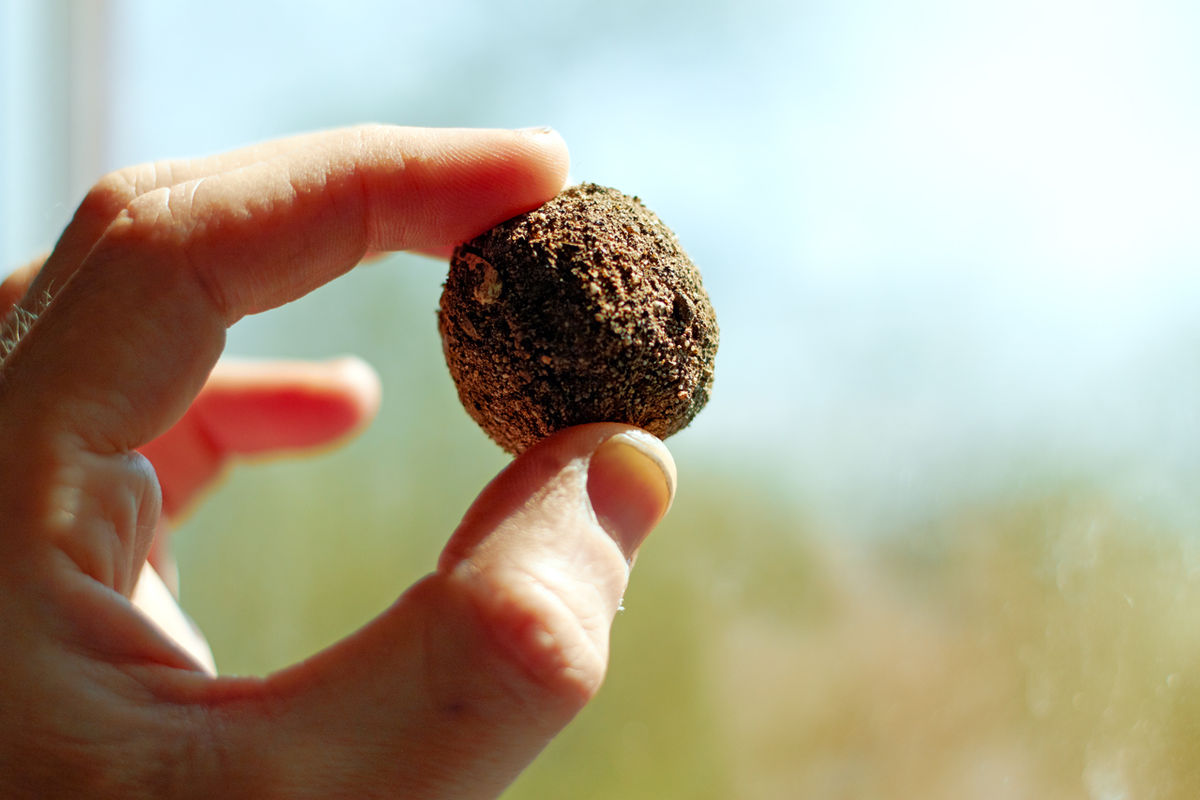 Seed balls, also known as earth balls or nendo dango (Japanese: 粘土団子 ) , consist of a variety of different seeds rolled within a ball of clay,