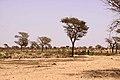 Senegal campagna.jpg