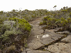 Réunion National Park - A trail leading to the Roche Écrite summit