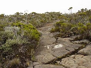 Réunion National Park - A trail leading to the Roche Écrite summit