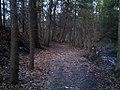 Service Road remnants.jpg
