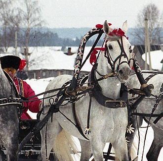 Shaft bow - Horse in a troika harness with a shaft bow