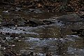 Sharon Woods-Spring Creek through the Rocks 1.jpg