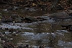 Sharon Woods-Spring Creek through the Rocks 1.jpg