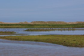 Image illustrative de l'article Cley Marshes