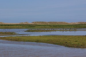 Cley Marshes - Looking north across the reserve
