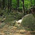 Sleza-forest-080603-15.jpg