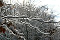 Sneeuw in Meerdaalbos - 372750 - onroerenderfgoed.jpg