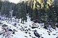Snow 1231323.jpg