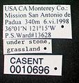 Solenopsis truncorum casent0010696 label 1.jpg