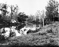 South Pine River, 1890.jpg