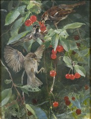 Sparrows in a Cherry Tree. Five studies in one frame, NM 2223-2227