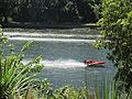 Speedboats on the Waikato River, Hamilton 02.JPG