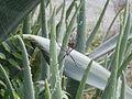 Spider, Praia, Cape Verde.jpg