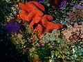 Sponge at Alphard Banks P4100509.jpg