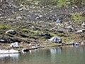 Spot the marmot (1402182077).jpg