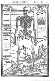 Description du squelette humain extraite de De Dissectione partium corporis écrit par Charles Estienne.