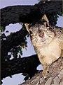 Squirrel (5062235137).jpg