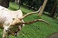 Sri Lanka, Peradeniya Botanical Gardens, Bull.jpg