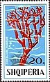 Stamp of Albania - 1975 - Colnect 355486 - Red Coral Coralltum rubrum.jpeg