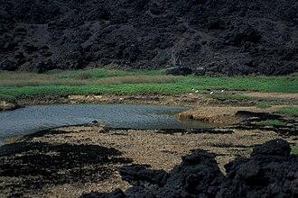 Ahihi-Kinau Natural Area Reserve - Sesuvium portulacastrum (habitat with forest)