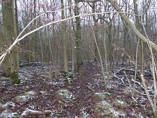 Stoke Wood End Quarter nature reserve in the United Kingdom