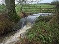 Stream near Staple Fitzpaine - geograph.org.uk - 1617178.jpg