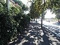 Street - panoramio (37).jpg