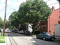 Street with large trees (4763143496).jpg