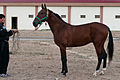 Studfarm in Turkmenistan - Flickr - Kerri-Jo (114).jpg