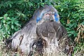 Stump Carving Elvaston Derby.JPG