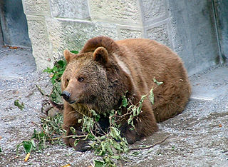 320px-Suisse_2005_Berne_ours dans OURS