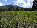 Summer flowers below the Peaks (9557943235).jpg
