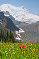 Summerland wildflowers with Mt. Rainier backdrop 03.jpg
