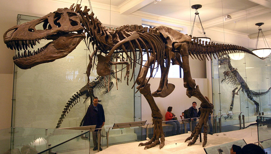 Animatronics Natural History Museum