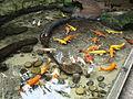 Taronga Zoo (6182531834).jpg