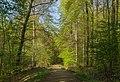 Tecklenburg Habichtswald Alter Tecklenburger Weg 02.jpg