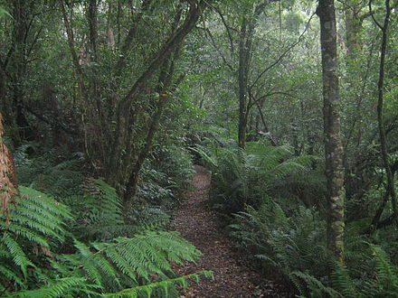 A temperate rainforest in Great Otway National Park, in the southwest region of the state Temperate rainforest in Great Otway National Park, Victoria.JPG