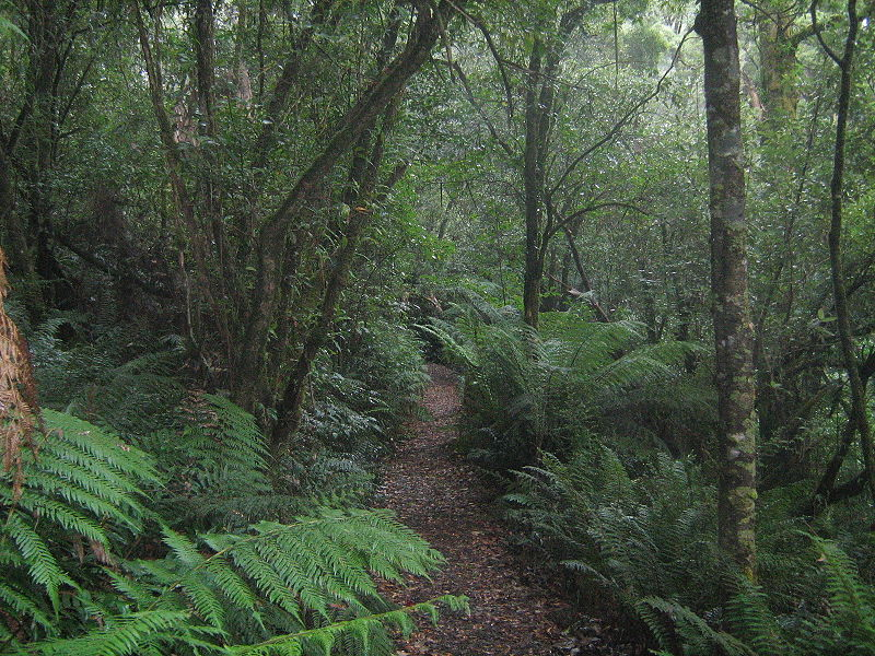 Temperate rainforest in Great Otway National Park, Victoria.JPG