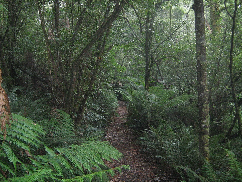 Temperate rainforest in Great Otway National Park, Victoria